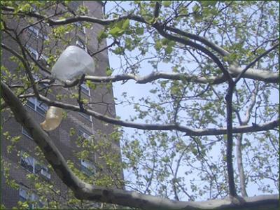 Bolsas en los árboles 2