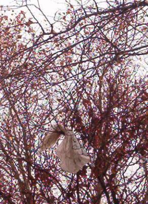 Bolsas en <p> los árboles