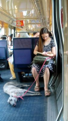 ¡Perros al Tren!