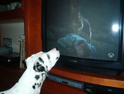 ¿Los perros ven la tele?